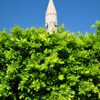 Top of a tower of a mosque from under green bushes — Stock Photo
