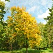 Autumn tree in are solar day - Stock Photo