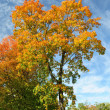 Multi colored leaves of trees against the blue sky — Stock Photo