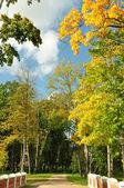 Footpath through the bridge in autumn park — Stock Photo