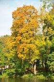 Autumn tree at a pond — Stock Photo