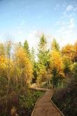 Trilha de madeira passa a floresta — Fotografia Stock