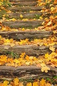 Wooden stairs covered with yellow leaves — Stock Photo