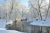 White snow and trees on both sides of the small river — Fotografia Stock