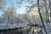 Reflection on water of trees covered with snow — Stock Photo