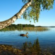 Stock Photo: Nature at lake
