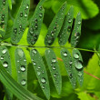 Stock Photo: Water droplets on green grass