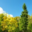 Autumn trees in park in a sunny day — Stock Photo