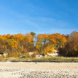 Stock Photo: Autumn in dunes