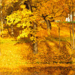 Stock Photo: Yellow leaves on trees