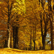Stock Photo: Footpath in park in autumn