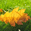 Stock Photo: Autumn leaves on green lawn
