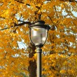 Stock Photo: Lamp in park in autumn time