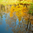 Stock Photo: Yellow leaves on trees at pond