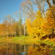 Yellow leaves on trees at a pond — Stock Photo