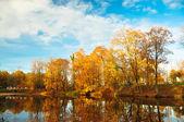 Sarı yaprakların ağaçlarda — Stok fotoğraf
