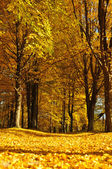 Footpath in park in the autumn — Stock Photo