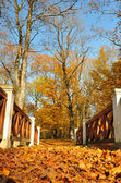 Yellow leaves on trees. Footpath bridge — Stock fotografie