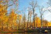 Sarı yaprakların ağaçlarda. patika köprüsü — Stok fotoğraf