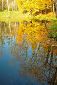 Yellow leaves on trees at a pond — Fotografia Stock