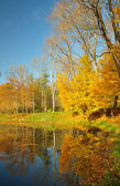 Yellow leaves on trees at a pond — Photo