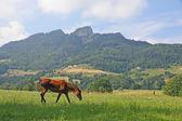 Krásné lesklé hnědé koně pasoucí se trávě — Stock fotografie
