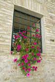 Sill iron scratch and flower vase petunias — Stock Photo