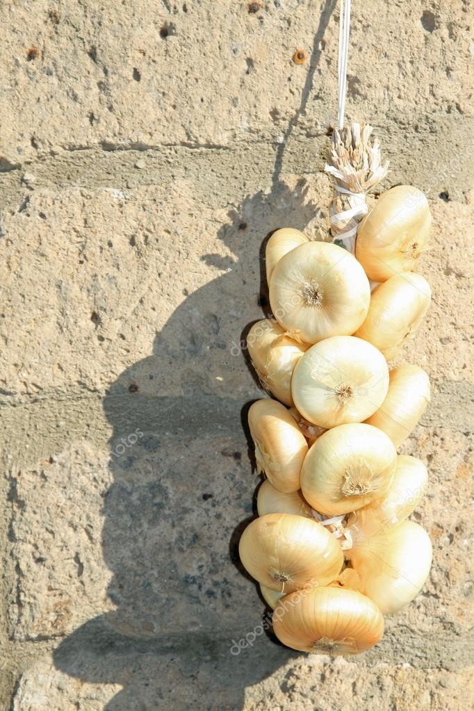 Luster of small white onions hanging on the wall of the fruit in a village in Italy  Stock Photo #12565662