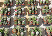 Collection of green cactus and Succulents — Stock Photo