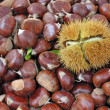 Chestnut and a pungent Hedgehog with the fruit inside — Zdjęcie stockowe