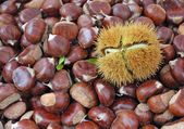 Chestnut and a pungent Hedgehog with the fruit inside — Stock Photo