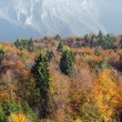 Mountain with a forest of maples and beeches with red and yellow — Stock Photo