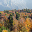 Mountain with a forest of maples and beeches with red and yellow - Stock Photo