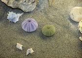 Seeigel gefüllt liegen am sandstrand — Stockfoto