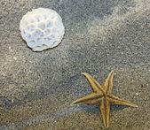 кораллов и морских звезд, лежа на песке на пляже — Стоковое фото