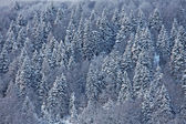 Snow covered trees on the Italian Dolomites — Stock Photo