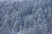 Snö täckta träd på italienska Dolomiterna — Stockfoto