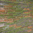 Old wet brick wall exposed to the North with a lot of green moss — Stock Photo