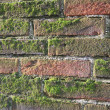 Old wet brick wall exposed to North with lot of green moss — Stock Photo #21145515