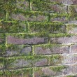 Old wet red brick wall exposed to the North with a lot of green — Stock Photo