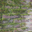 Old wet red brick wall exposed to the North with a lot of green - Stock Photo