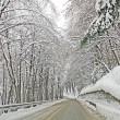 Icy mountain road with the trees full of freshly fallen snow — Stock Photo
