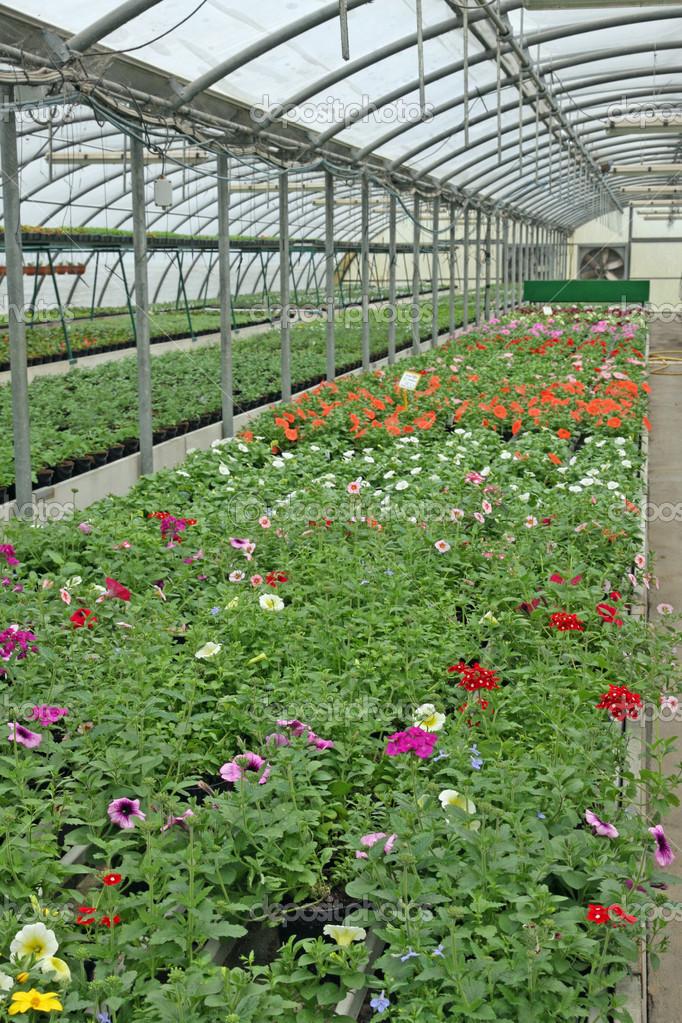 Invernadero para el cultivo intensivo de plantas con Plantas de invernadero
