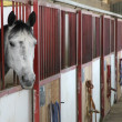 Horse stallions in enclosure of barn — Stock Photo #23624355