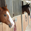 Mighty horse stallions in enclosure of barn of riding sc — Stock Photo #23624371