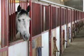 Horse stallions in the enclosure of a barn — Stock Photo