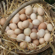 Old wicker basket with eggs laid on a soft straw from farmer — ストック写真