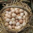 Fresh eggs just laid on a bed of fluffy straw — Stockfoto