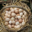 Stock Photo: Fresh eggs just laid on a bed of fluffy straw