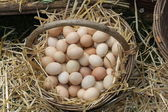 Fresh eggs just laid on a bed of fluffy straw — Stock Photo